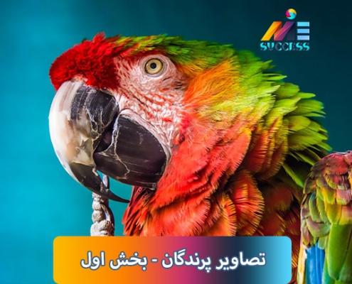 تصاویر پرندگان بخش اول