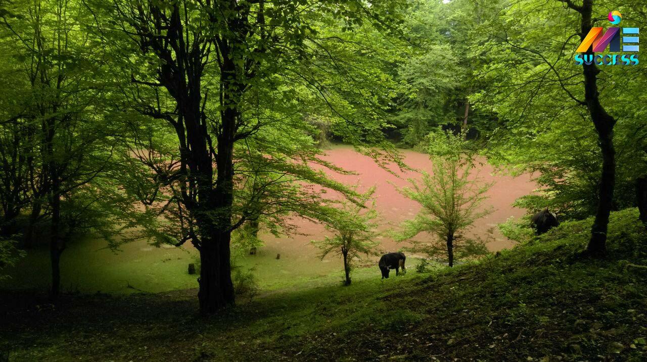 جنگل های زیبای چالوس - چالوس - شهر چالوس - مازندران