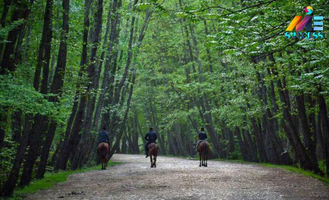 جنگل های زیبای چالوس در فصل پاییز
